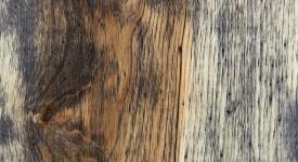 White Oak - Apiarist